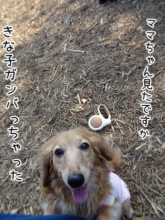 kinako9413.jpg
