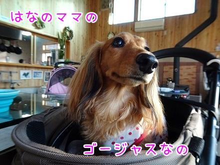 kinako9419.jpg
