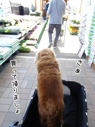 kinako9426.jpg
