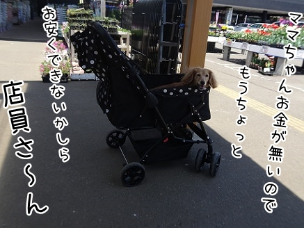 kinako9427.jpg