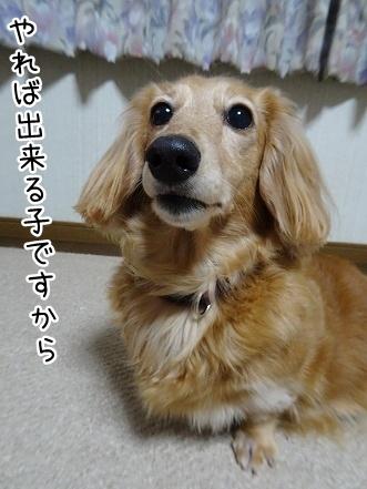 kinako9437.jpg