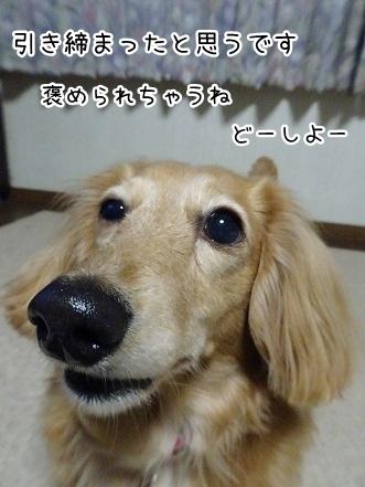 kinako9438.jpg