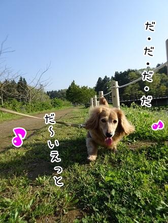kinako9446.jpg