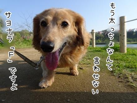 kinako9447.jpg