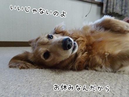 kinako9452.jpg