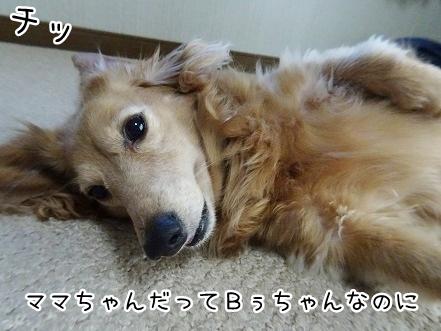 kinako9453.jpg
