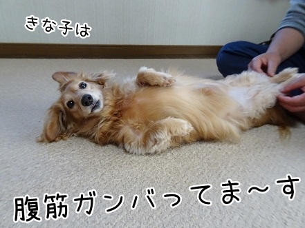 kinako9454.jpg