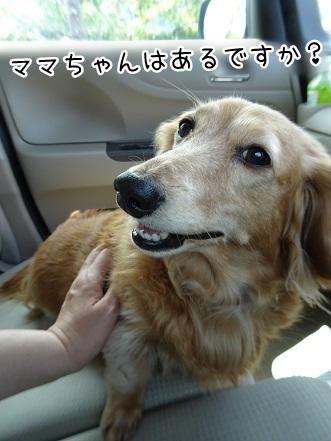kinako9465.jpg