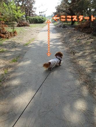 kinako9469.jpg