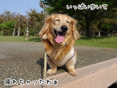 kinako9470.jpg