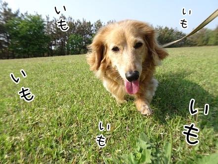 kinako9473.jpg