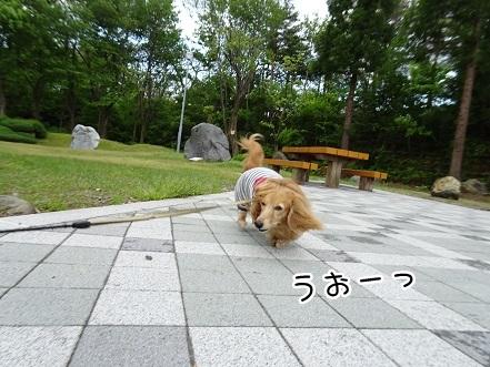 kinako9485.jpg