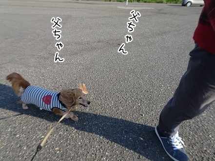 kinako9488.jpg