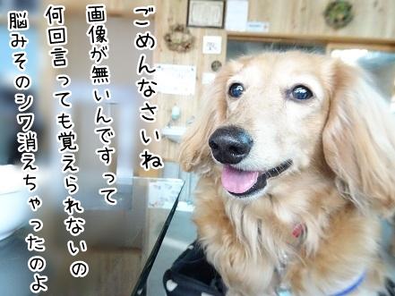 kinako9504.jpg