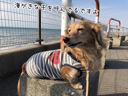 kinako9508.jpeg