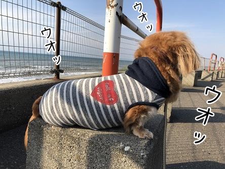 kinako9511.jpeg