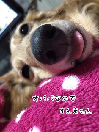 kinako9516.jpeg