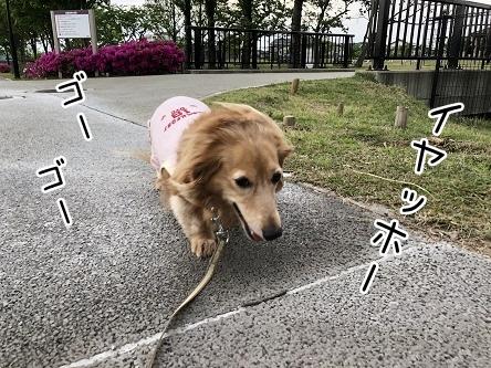 kinako9534.jpeg