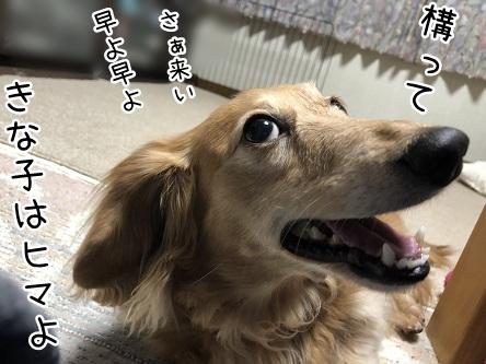 kinako9555.jpeg