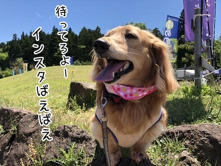 kinako9591.jpeg