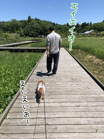 kinako9592.jpeg