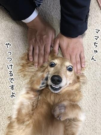 kinako9606.jpeg