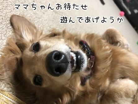 kinako9647.jpeg