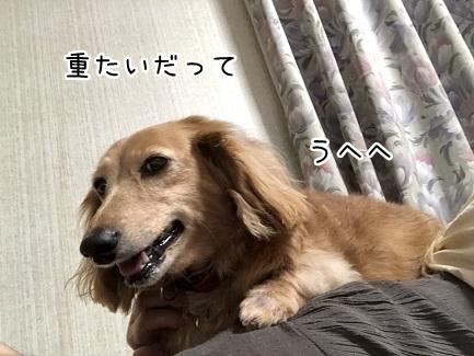 kinako9655.jpeg