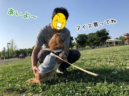 kinako9672.jpeg