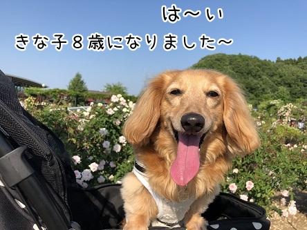 kinako9674.jpeg