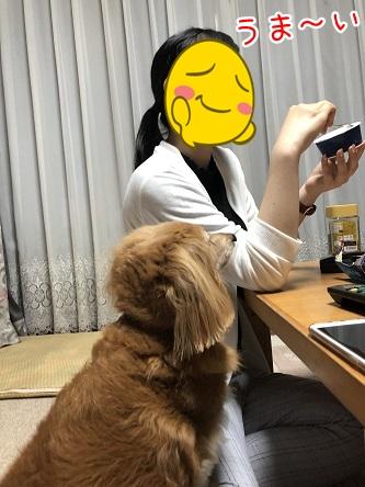 kinako9693.jpeg