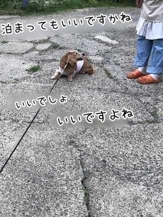 kinako9717.jpeg