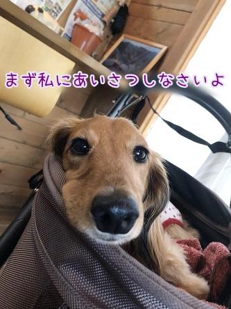kinako9718.jpeg