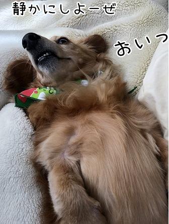 kinako9778.jpeg