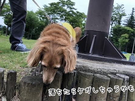 kinako9809.jpeg