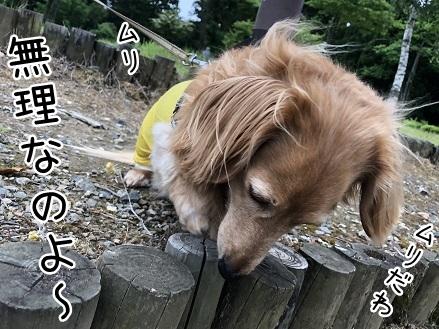 kinako9810.jpeg