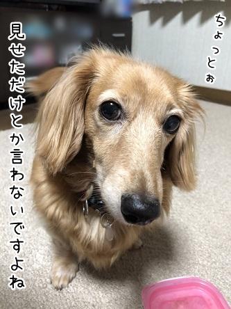 kinako9831.jpeg
