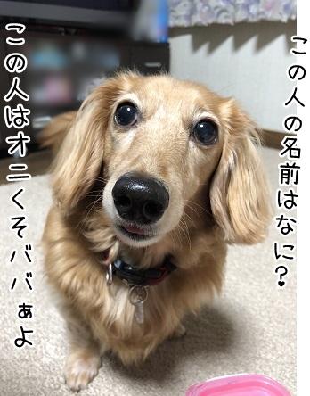 kinako9832.jpeg