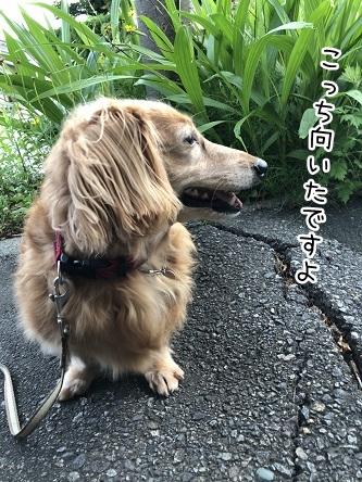 kinako9836.jpeg
