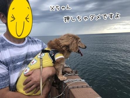kinako9843.jpeg