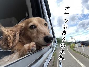 kinako9846.jpeg