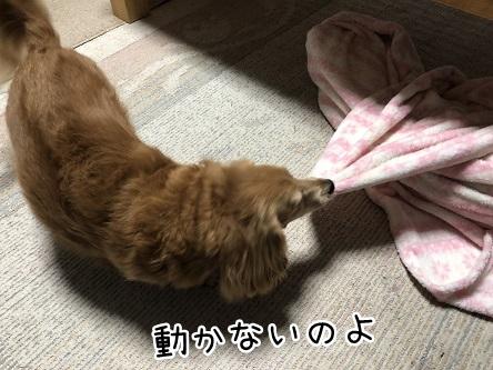 kinako9865.jpeg