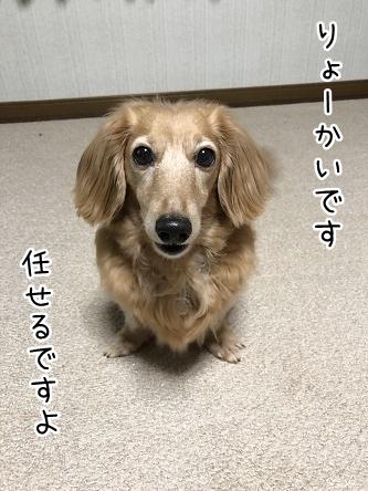 kinako9869.jpeg