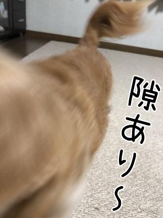 kinako9871.jpeg