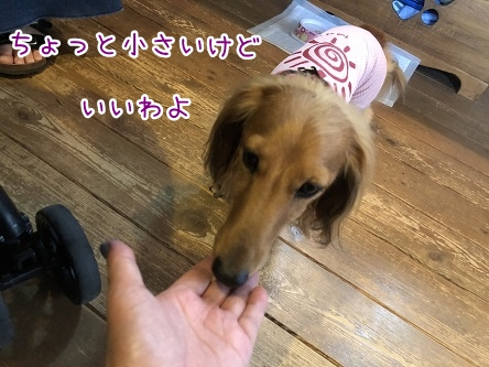 kinako9896.jpeg