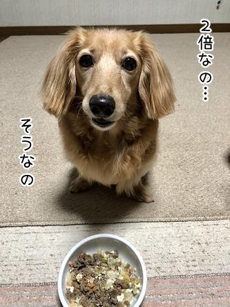 kinako9904.jpeg