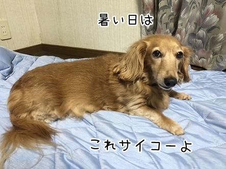 kinako9905.jpeg