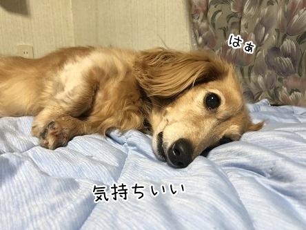 kinako9906.jpeg