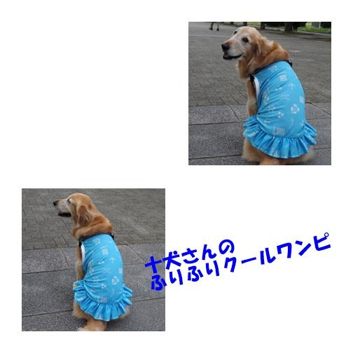 5201_20180524100043ecb.jpg