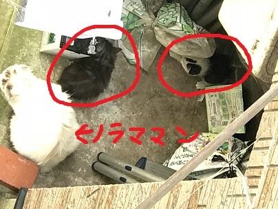 ノラ子子猫2